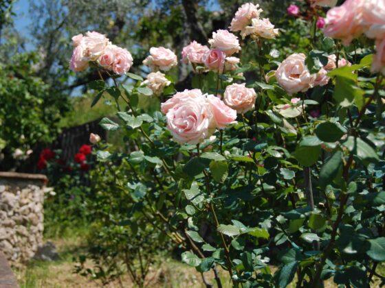 Elciarelli-Fleurs-1
